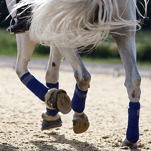 bg_equestre